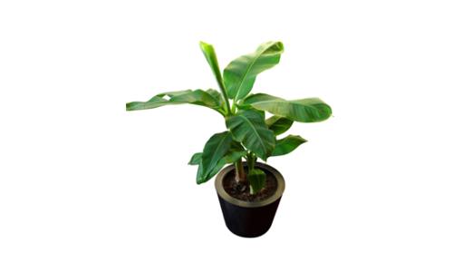 Entreprise négoce fleurs tropicales à vendre,, Vente fond de commerce, Vente portail web, cession site internet spécialisé